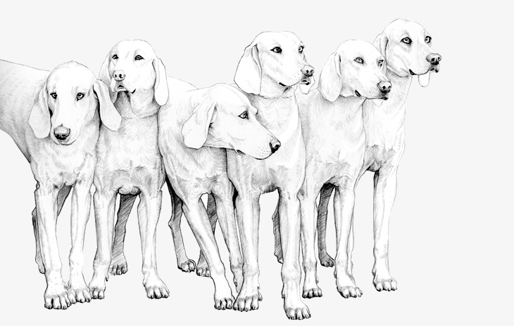 Quail Drawing Hunting Dog Dra...