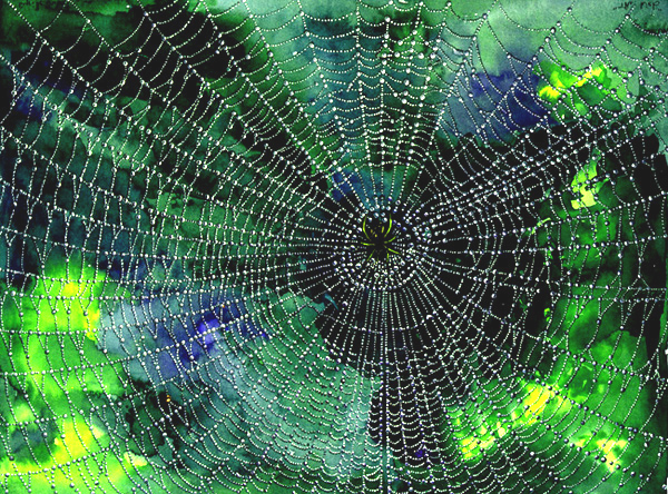 http://www.thedogmuseum.com/images/spider-web.jpg